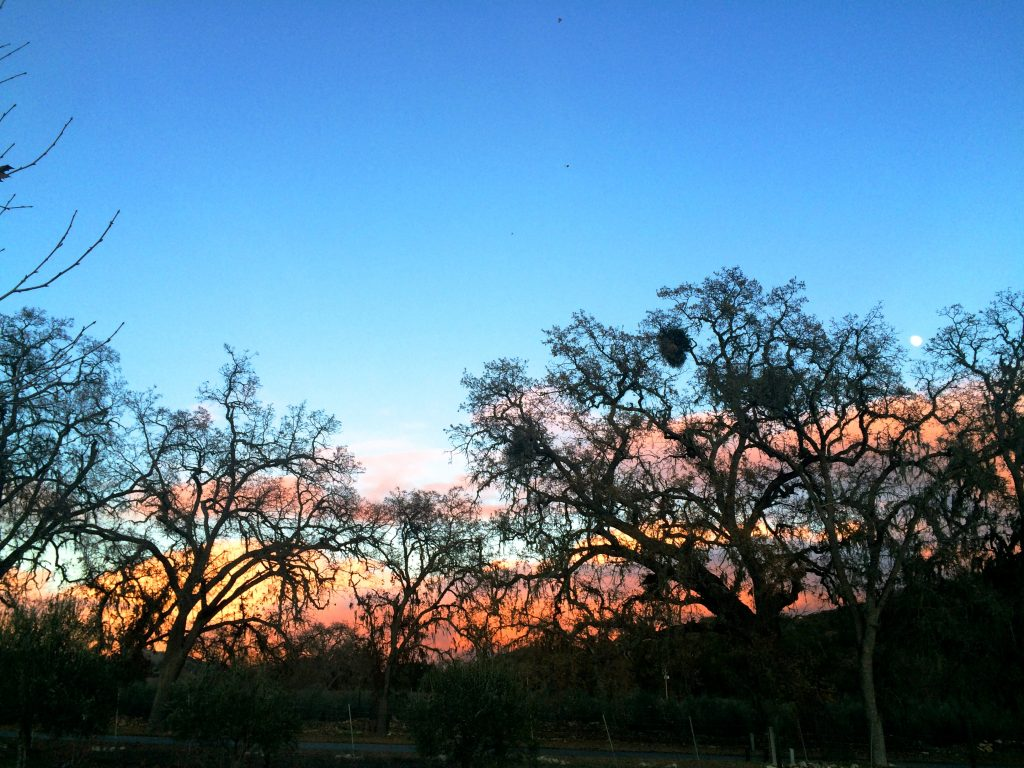 Paso Robles Trip - Sunset