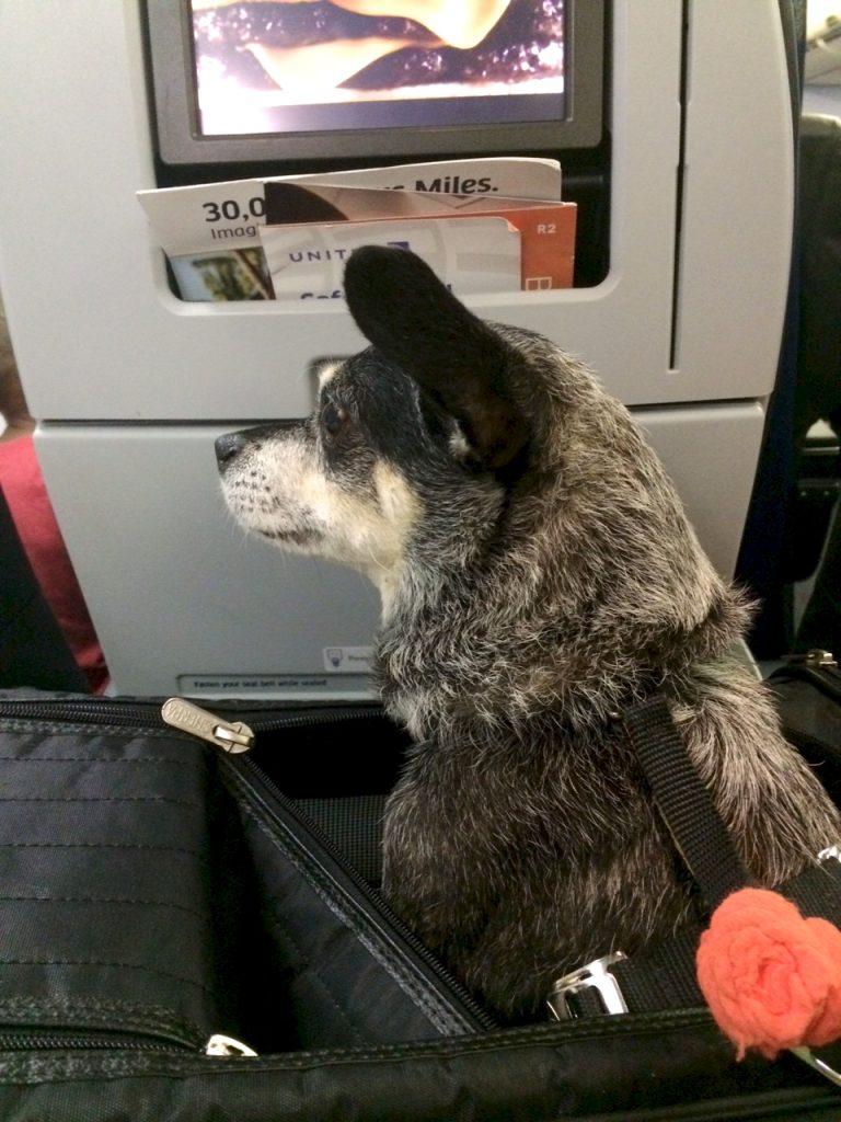 Bessie on an Airplane   www.littlechefbigappetite.com