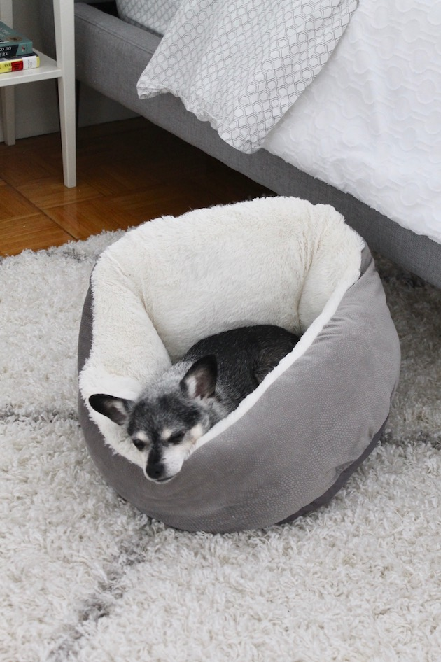 Creating an Ultra-Cozy Bedroom: White Rug, Best Friends by Sheri Gray and White Dog Bed ll www.littlechefbigappetite.com