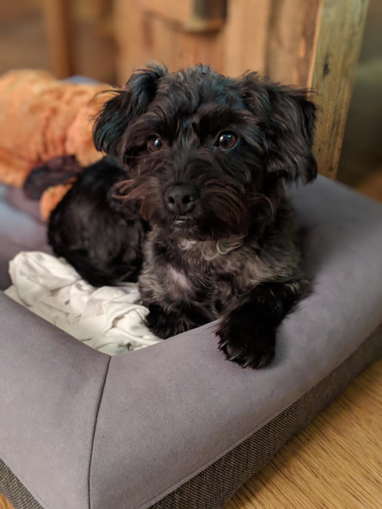 Ralphie Foster Dog | littlechefbigappetite.com